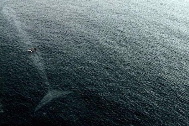 Лодка и кит