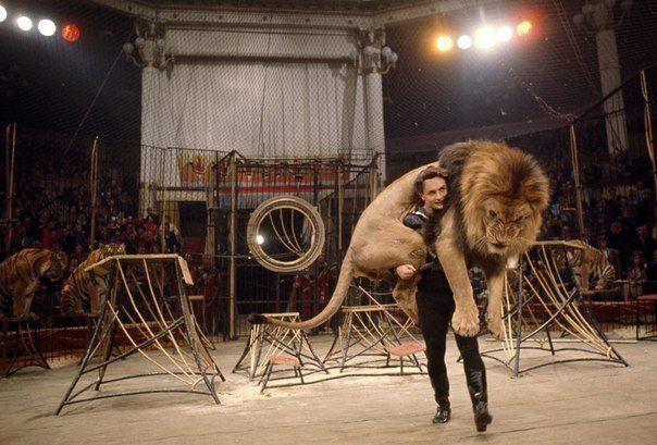 Дрессировщик несет льва